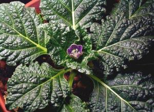 https://kalarupa.com/img/my_pics/Flowering-sm.jpg