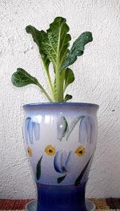 https://kalarupa.com/img/my_pics/Flowerpot-sm.jpg